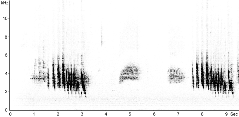 Sonogram of African Chaffinch song