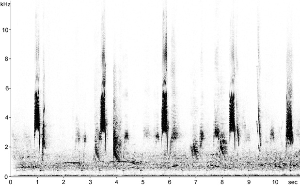 Sonogram of Alpine Chough calls