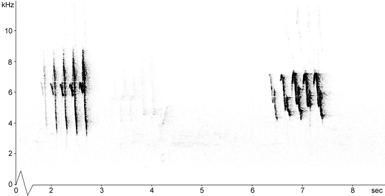 Sonogram of American Redstart song