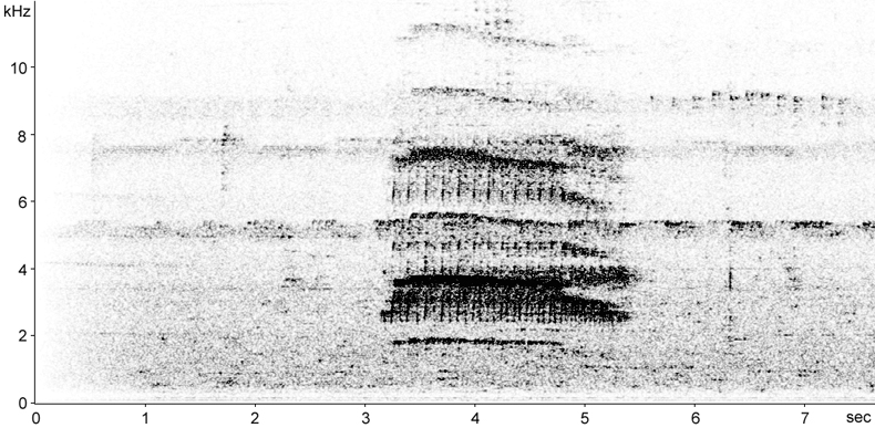 Sonogram of Bamboo Woodpecker call