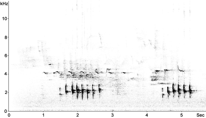 Sonogram of Blackbird alarm call