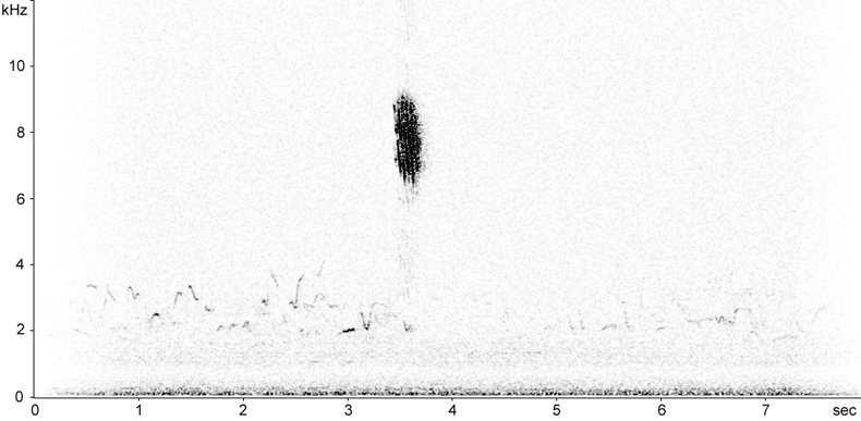Sonogram of Blackbird flight call