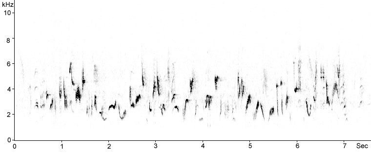 Sonogram of Blackcap song