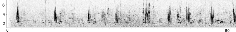 Sonogram of Black-eared Wheatear song