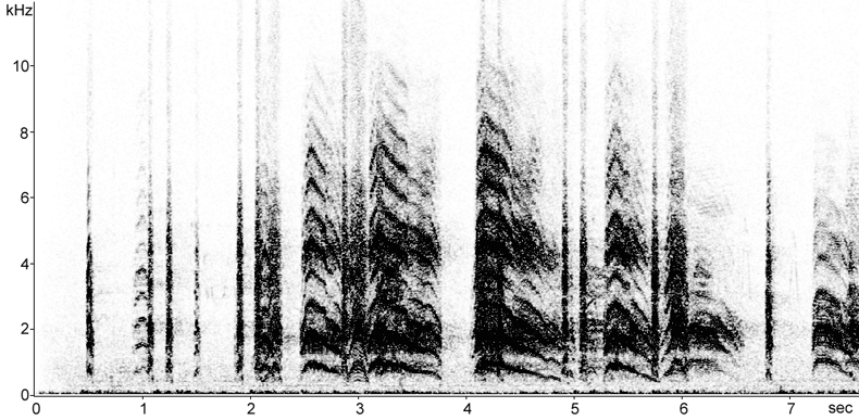Sonogram of calls from Black-headed Gull colony