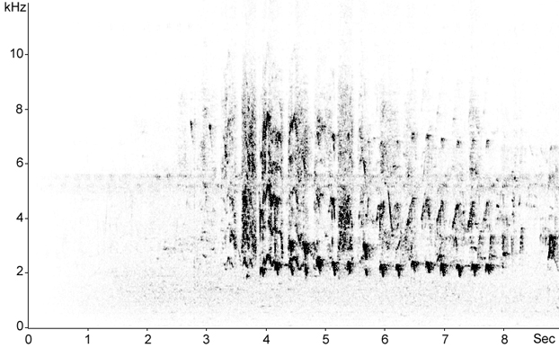 Sonogram of Black Kite calls