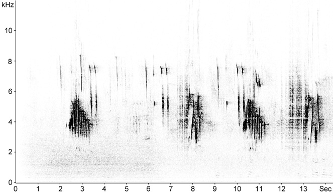 Sonogram of Black Redstart song