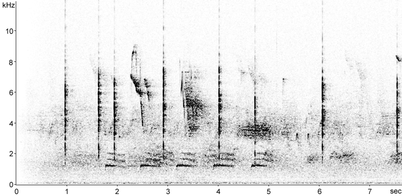 Sonogram of Black Redstart calls