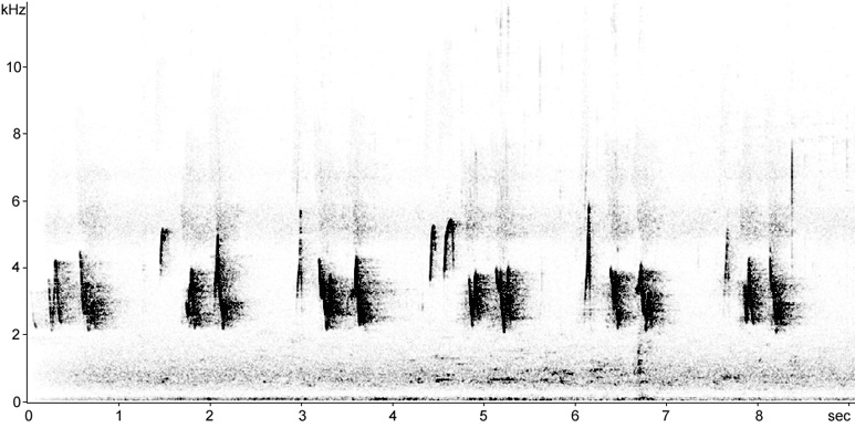 Sonogram of Black-whiskered Vireo song