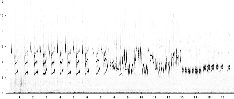 Sonogram of Bluethroat song in flight