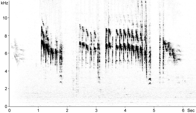 Sonogram of Blue Tit begging calls