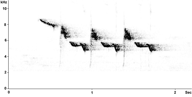 Sonogram of Blue Tit song