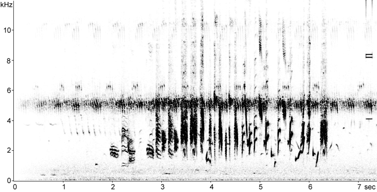 Sonogram of Bobolink perched song