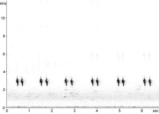 Sonogram of Bullfinch call