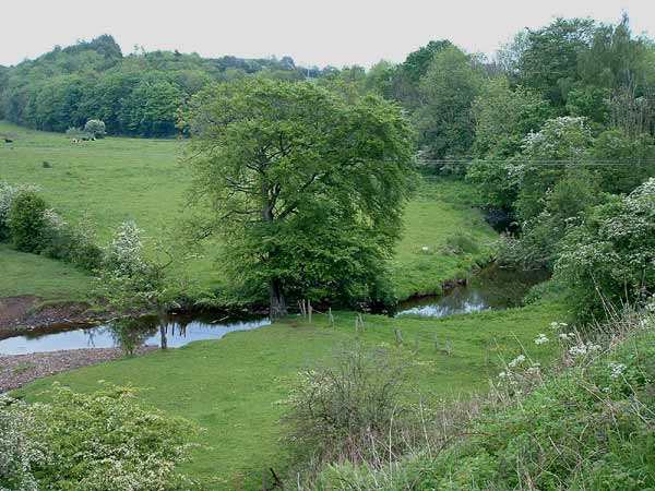 Point 1. View from bridge over Carmel Water: Warblers, Long-tailed Tit, Bullfinch, Great Spotted Woodpecker, Song Thrush, etc. (Knockentiber-Springside disused railway line) © Fraser Simpson