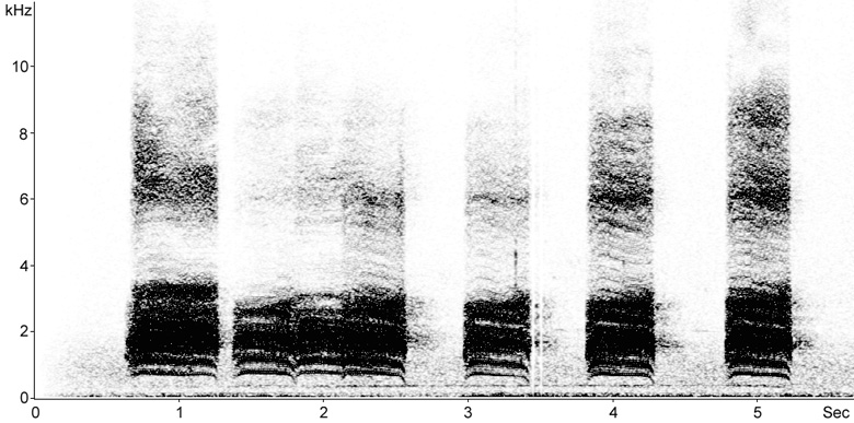 Sonogram of Carrion Crow vocalisations