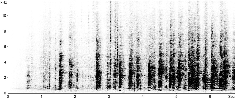 Sonogram of breeding calls from a Cattle Egret breeding colony