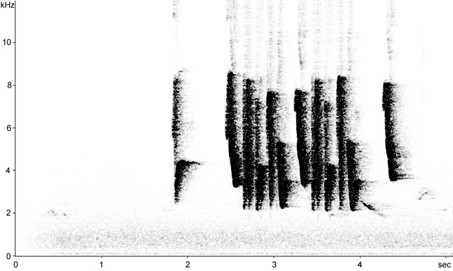Sonogram of Cetti's Warbler song