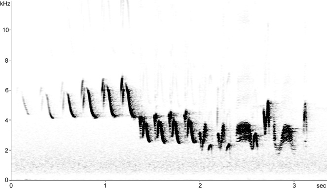 Sonogram of Chaffinch song