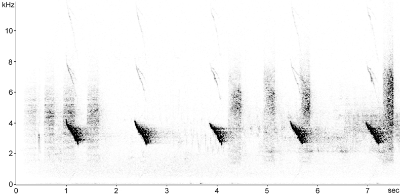Sonogram of Chaffinch calls