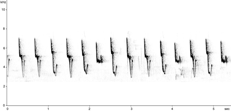 Sonogram of Chiffchaff song