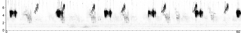 Sonogram of Cirl Bunting song