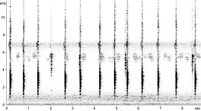 Sonogram of Common Grackle calls
