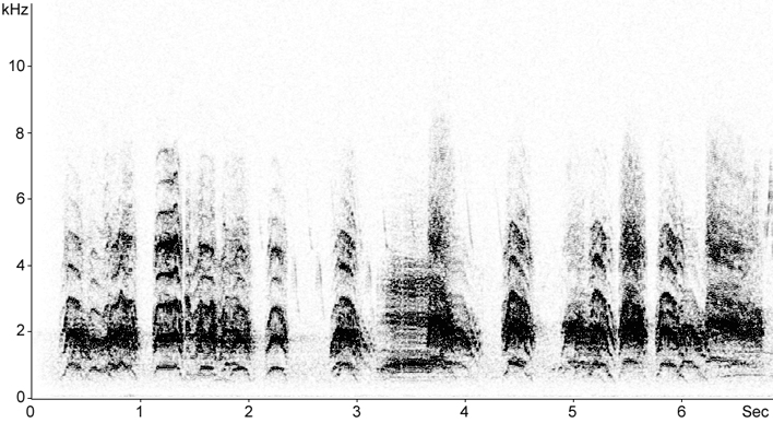 Sonogram of Common Gull call