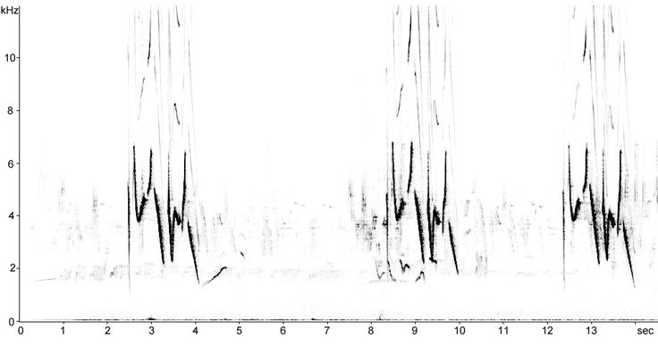 Sonogram of Common Rosefinch song