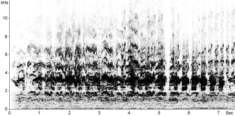Sonogram of Common Tern calls from breeding colony