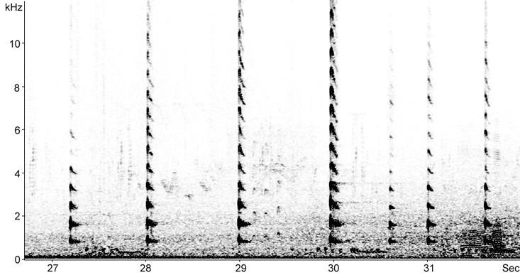 Sonogram of Coot calls