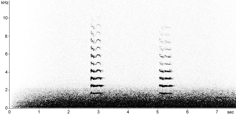 Sonogram of Coot flight calls at night