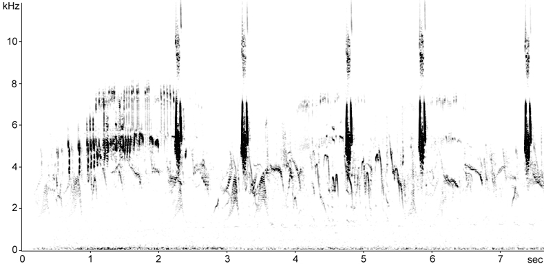 Sonogram of Corn Bunting calls