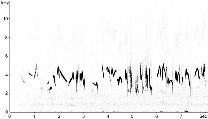 Sonogram of Crested Lark song