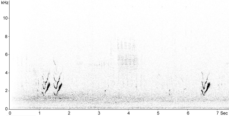 Sonogram of Crested Lark calls