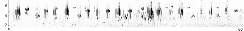 Sonogram of Cretzschmar's Bunting song