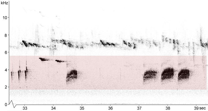 Sonogram of Common Crossbill vocalisations