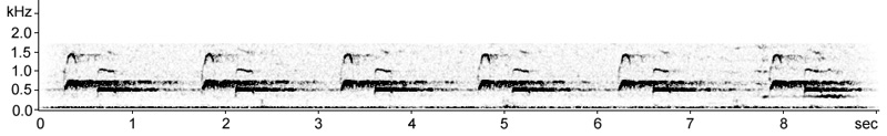 Sonogram of Cuckoo song