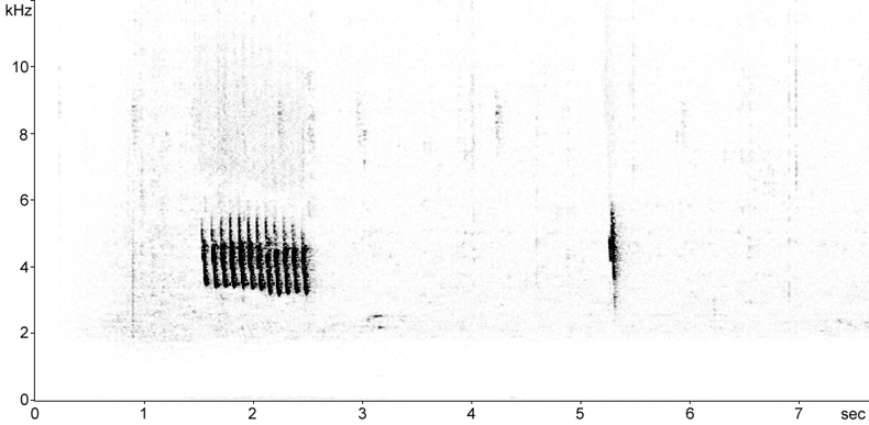 Sonogram of Eastern Bonelli's Warbler song