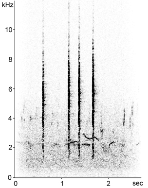 Sonogram of Eastern Olivaceous Warbler call