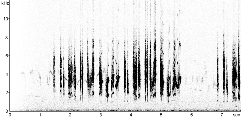 Sonogram of Eastern Olivaceous Warbler song