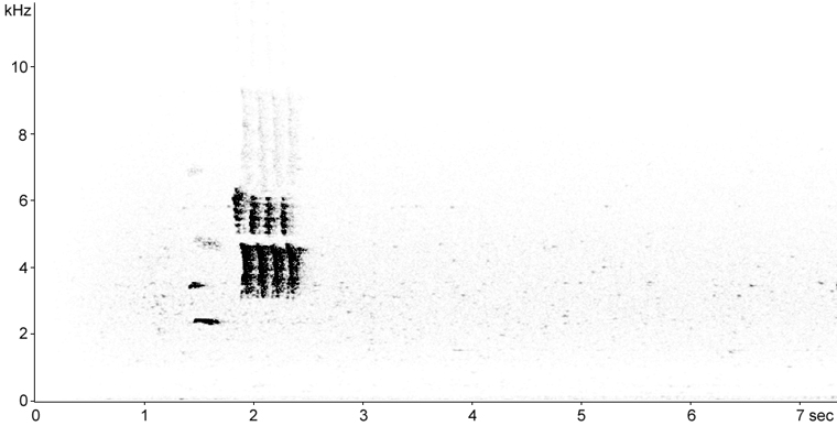 Sonogram of Eastern Towhee calls