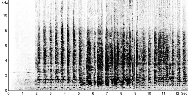 Sonogram of Egyptian Goose calls