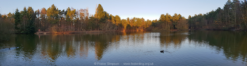Feral Barnacle Geese at the NE lake in Maple zone, Elveden Forest © Fraser Simpson