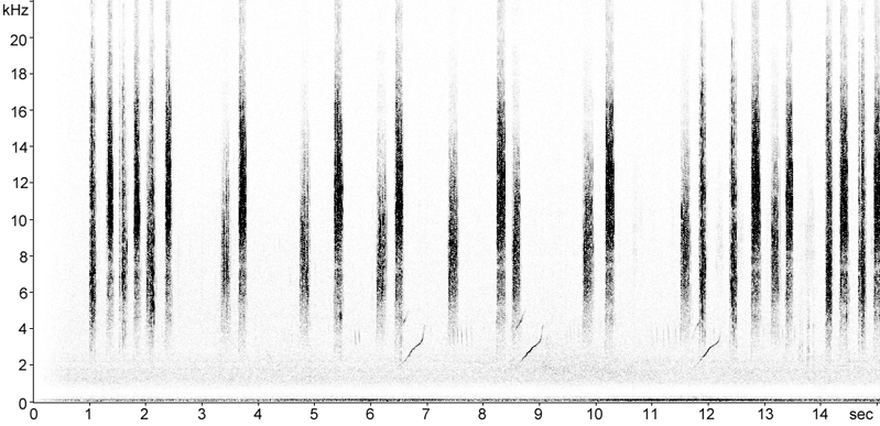 Sonogram of Field Grasshopper stridulation