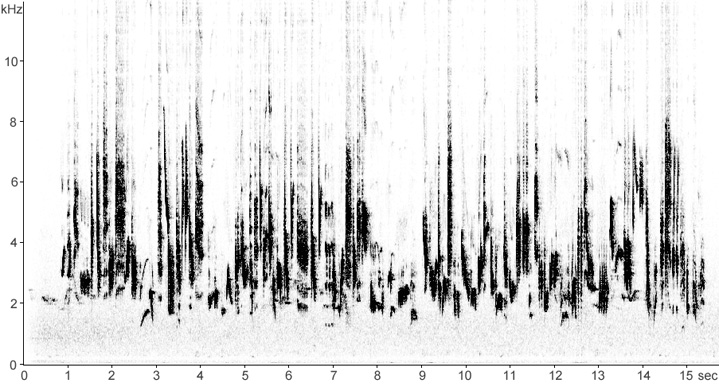Sonogram of Garden Warbler song
