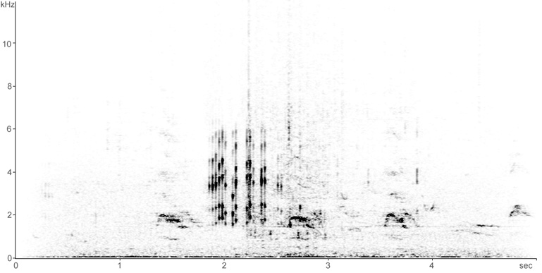 Sonogram of Cormorant breeding calls