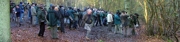 Grey-cheeked Thrush twitch, Northaw Great Wood, Herts �2005 Alistair Simpson