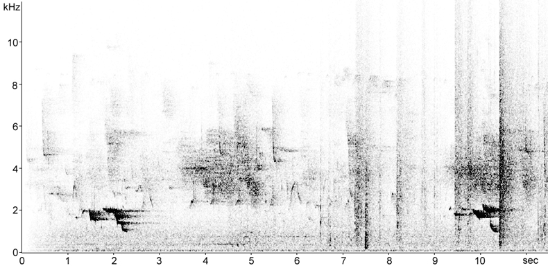 Sonogram of Golden Oriole song