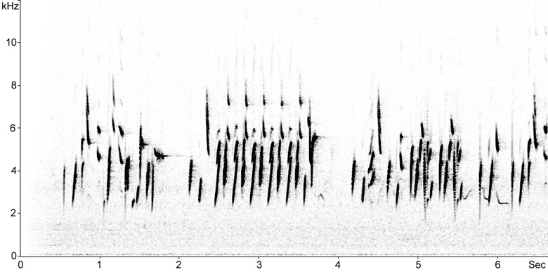 Sonogram of Goldfinch song